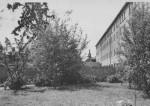 1950 : Le jardin près du bloc Lemineur