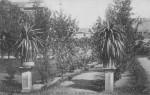 1908 : Une des allées du jardin